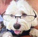 Professor Max2
