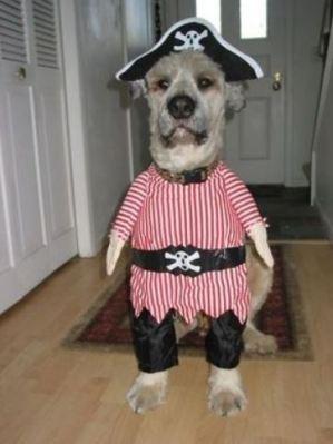 Dog Hallo 3