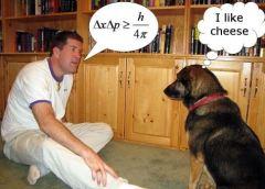 smart dog pic