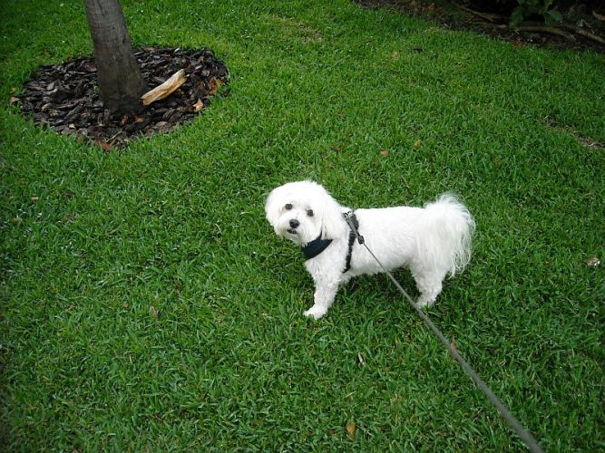 Nice Grass Dog
