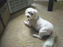 Max Haircut