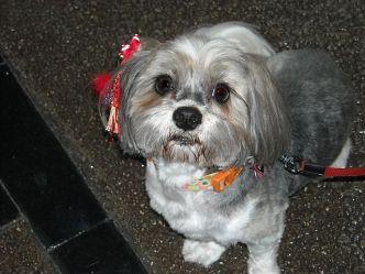 Sophie 3