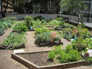 Urban gardens are a delight and attract dedicated senior gardeners.