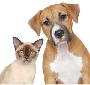 The never ending dog vs. cat debate.