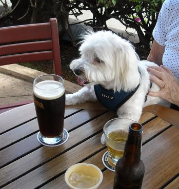 Max with his Schwarzenbier waiting patiently for a burger.