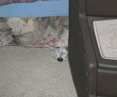 "I said ""bath"" and Max retreated to his hiding place under the bed, next to his dog stairs."