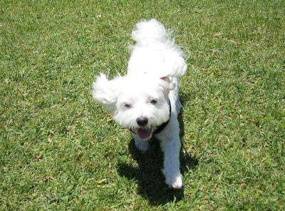 Run, Maxie! Run like the wind.