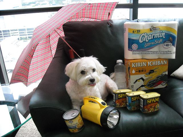 Hurricane Preparedness Pup is prepared.