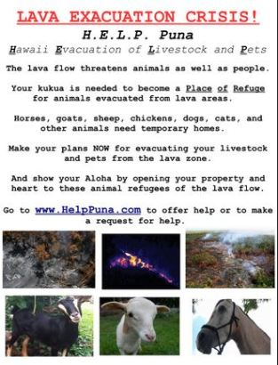Community plan to provide refuge for animals.