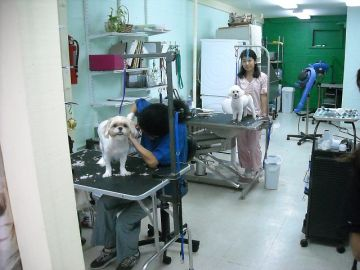 Inside the Beauty Salon for Doggies. Nanko-san's assistants were hard at work on demanding customers.