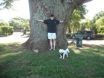 Earpod tree