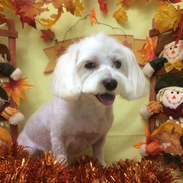 His official haircut portrait. Ripped and ready for the holiday season.