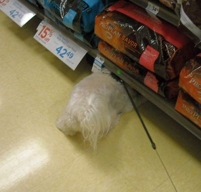 Hunting for pet food that has fallen under the display racks at Petco is max's idea of high adventure.