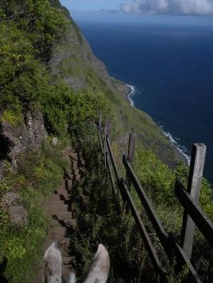 The view over your mule's ears as you descend the sea cliffs of Molokai.