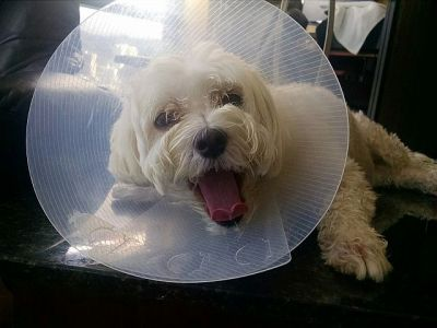 Cone Dog expresses his displeasure.