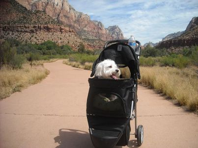 Zion Max in Carrier