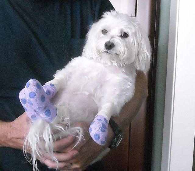 Max w bandages 1.jpg