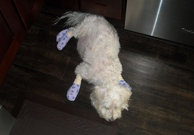 Max w bandages 2