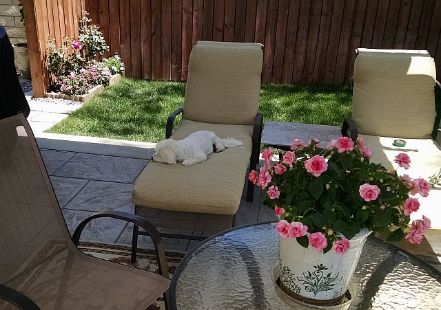 Max on Chaise