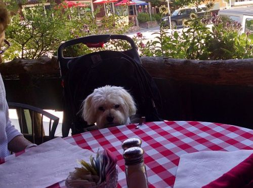 Max Italian restaurant