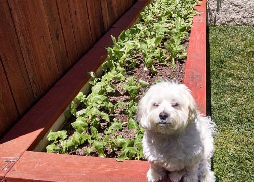 Max on planter