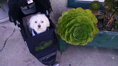 Max with Succulent