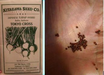 Seed Comp
