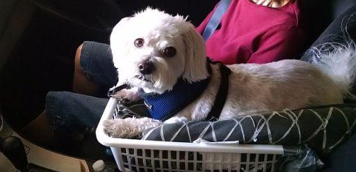 Max in car seat 2