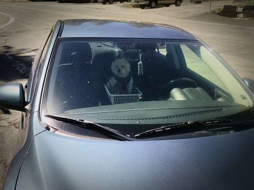 Max in Car Seat