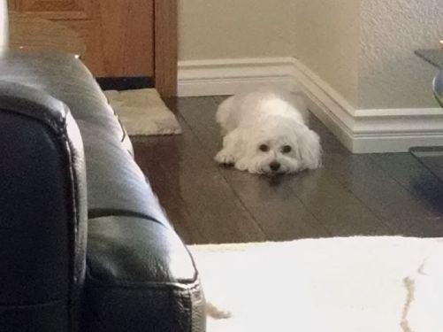 Wait at front door