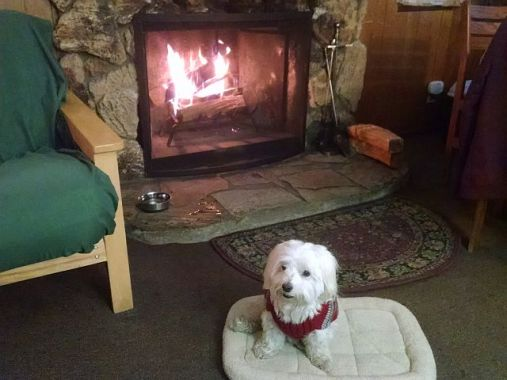 Max at Fireplace