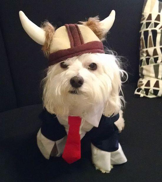 Viking Max