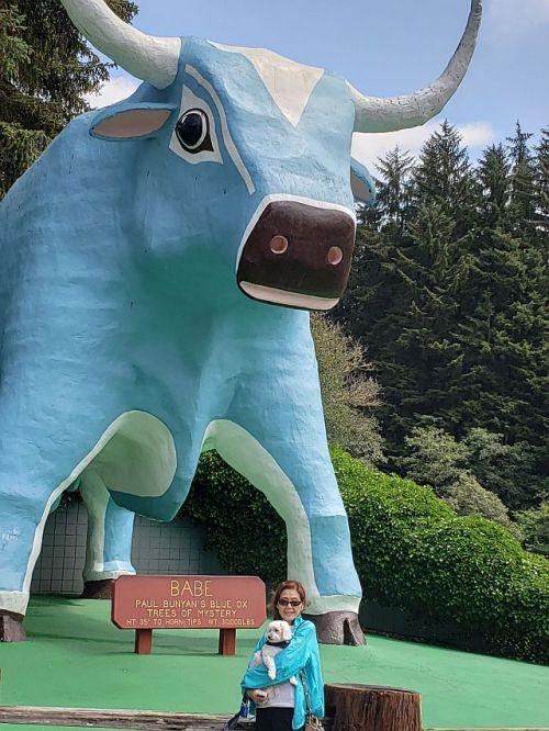 Blue Ox 1