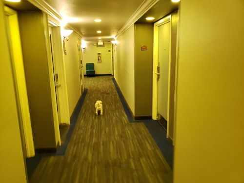 Dog in bad hotel