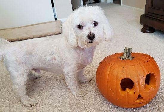 Max & Pumpkin 3