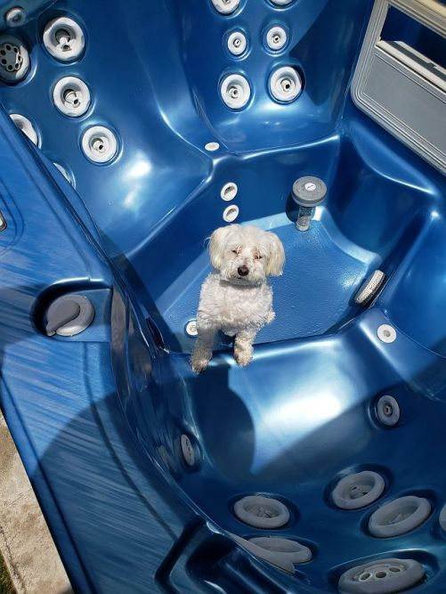 Max in hot tub
