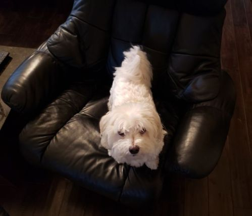 Max on chair 2
